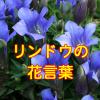 リンドウの花言葉や敬老の日に長生きを願う花ギフトの種類