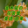 金木犀の花言葉はとっても素敵!英語で言うと?由来は何?