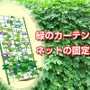 緑のカーテンのネット張り方で一戸建てやベランダでの固定
